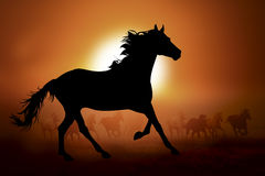 Siluetta di un cavallo nel tramonto Fotografie Stock Libere da Diritti