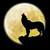 Siluetta di un lupo davanti alla luna Fotografia Stock