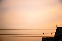 Siluetta di un uccello su cavo elettrico Fotografia Stock Libera da Diritti