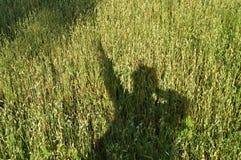 Siluetta di un uomo, l'ombra sull'erba, un campo di grano Immagini Stock