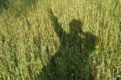 Siluetta di un uomo, l'ombra sull'erba, un campo di grano Immagine Stock