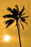 Siluetta di una palma contro il sole immagini stock libere da diritti