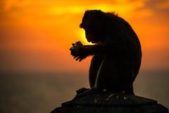 Siluetta di una scimmia Fotografie Stock