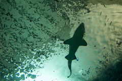 Siluetta di uno squalo Immagine Stock Libera da Diritti