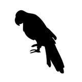 Siluetta di vettore del pappagallo Fotografie Stock