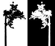 Siluetta di vettore del pino Fotografia Stock Libera da Diritti
