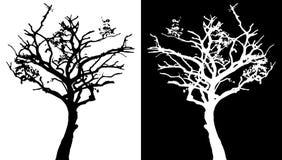 Siluetta di vettore dell'albero Immagine Stock Libera da Diritti