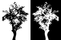 Siluetta di vettore dell'albero Immagini Stock