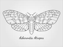 Siluetta disegnata a mano del lepidottero di falco Immagini Stock Libere da Diritti