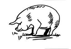 Siluetta domestica del maiale Immagine Stock