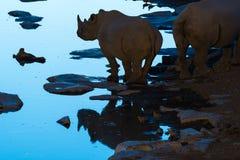 Siluetta e riflessione del rinoceronte nero a waterhole durante la b Fotografia Stock
