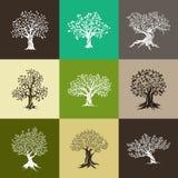 Siluetta magnifica delle querce e dell'oliva Fotografie Stock Libere da Diritti