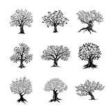 Siluetta magnifica delle querce e dell'oliva Immagini Stock Libere da Diritti