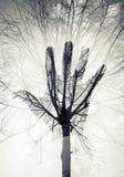 Siluetta maschio della mano sopra il cielo ed il modello sfrondato dell'albero fotografia stock