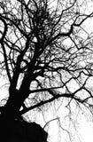Siluetta monocromatica dell'albero immagine stock