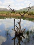 Siluetta morta dell'albero in acqua fotografie stock