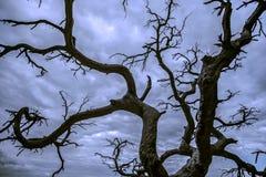 Siluetta nera dell'albero Fotografie Stock