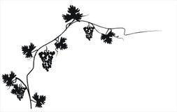 Siluetta nera dell'uva. Illustrazione di vettore. Immagine Stock Libera da Diritti