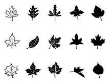Siluetta nera delle foglie di acero Fotografia Stock Libera da Diritti