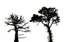 Siluetta nera di un pino su un bianco Immagine Stock