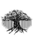 Siluetta nera di vecchio albero di banyan isolato su fondo bianco Immagini Stock Libere da Diritti