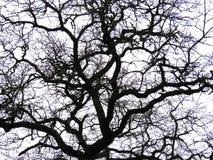 Siluetta nuda dei rami di albero fotografie stock libere da diritti