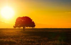 Siluetta sola dell'albero sul campo aperto Immagine Stock
