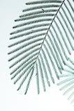 Siluetta tropicale del foglio Fotografia Stock