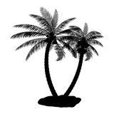 Siluetta tropicale della palma Fotografia Stock