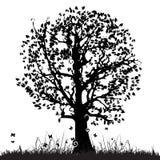 Siluetta vecchia, erba dell'albero Fotografia Stock