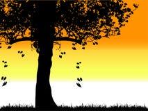 Siluetta vecchia, erba dell'albero Fotografie Stock