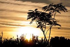 Siluette дерева Стоковое фото RF