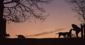 siluette Fotografie Stock Libere da Diritti