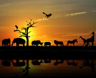 Animali africani Immagini Stock Libere da Diritti