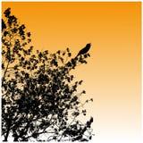 Siluette, albero, uccello Immagine Stock