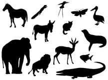 Siluette animali Fotografia Stock Libera da Diritti
