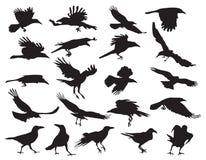 Siluette commoventi dei corvi royalty illustrazione gratis