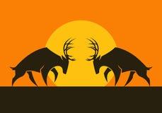 Siluette cornute di vettore dei cervi contro il sole immagine stock