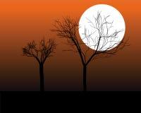 Siluette degli alberi Immagine Stock
