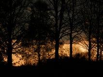 Siluette degli alberi Fotografie Stock