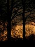 Siluette degli alberi - 2 Fotografie Stock Libere da Diritti