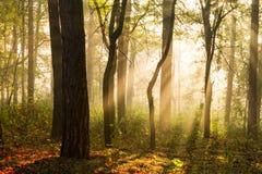 Siluette degli alberi alla contro luce del sole Fotografia Stock