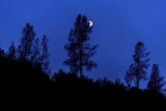 Siluette degli alberi alla notte Immagini Stock
