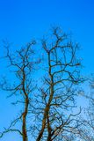 Siluette degli alberi contro cielo blu, giorno soleggiato, forma verticale immagine stock