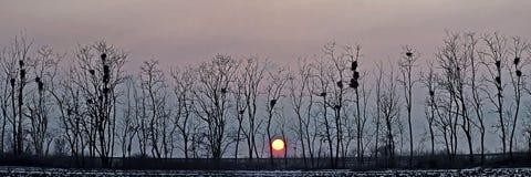 Siluette degli alberi contro il contesto del tramonto Fotografie Stock Libere da Diritti