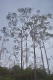 Siluette degli alberi contro lo sfondo del cielo Immagine Stock