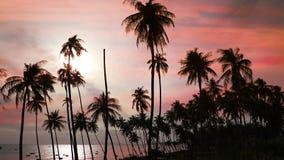 Siluette degli alberi del cocco