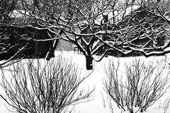 Siluette degli alberi e dei cespugli sotto la neve in bianco e nero fotografia stock libera da diritti