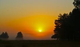 siluette degli alberi nel campo sul fondo di tramonto Fotografia Stock
