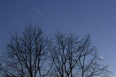 Siluette degli alberi nel cielo uguagliante scuro su cui le tracce dagli aerei sono visibili fotografie stock libere da diritti